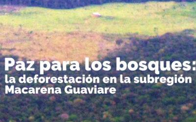 Paz para los bosques: la deforestación en región Macarena Guaviare